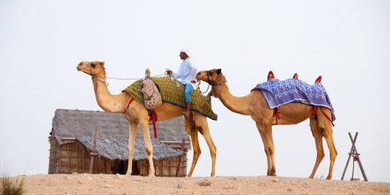 Paseo a Camello en Dubai