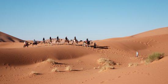 Camellos por Egipto