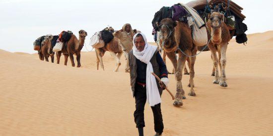 Camellos en Túnez