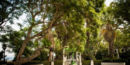 Arboles y plazas en Cadiz