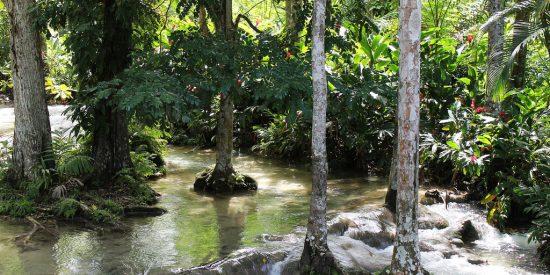 Las cataratas del Rio Dunn Jamaica